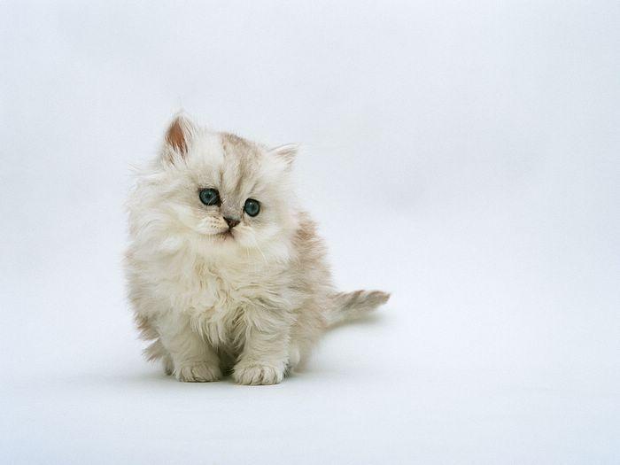 kitten melirik manja