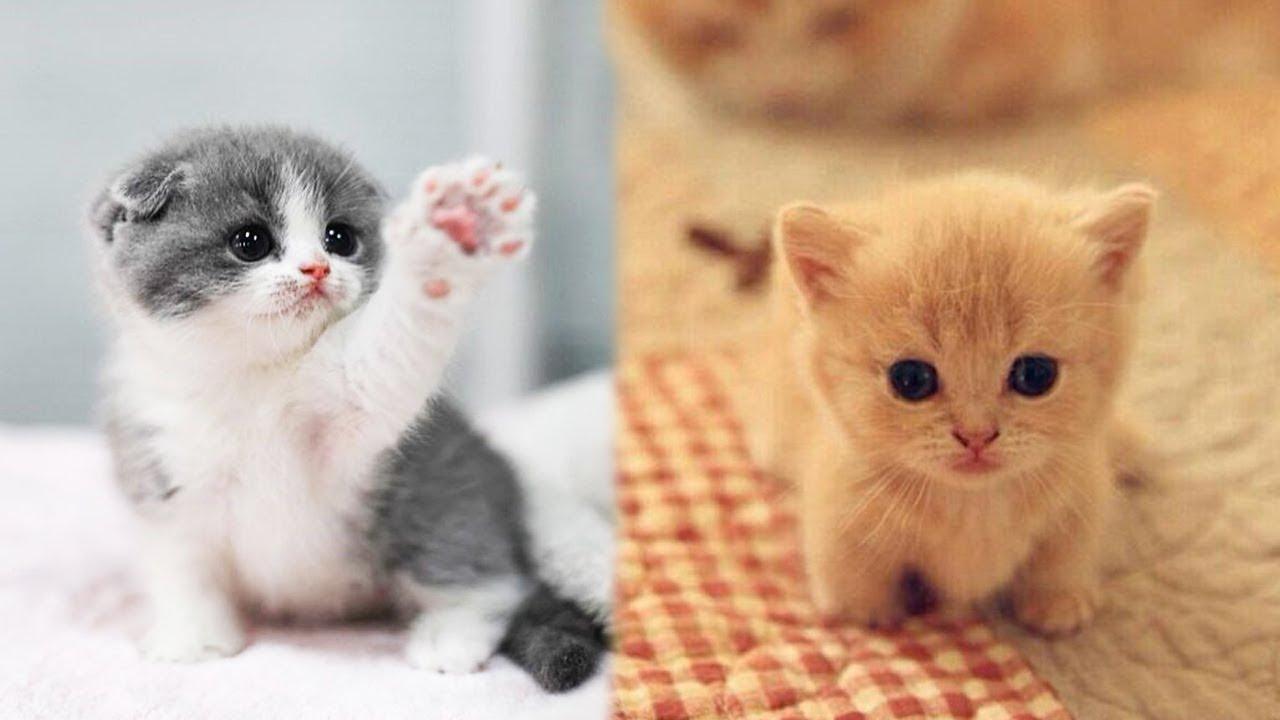 kumpulan video lucu kitten