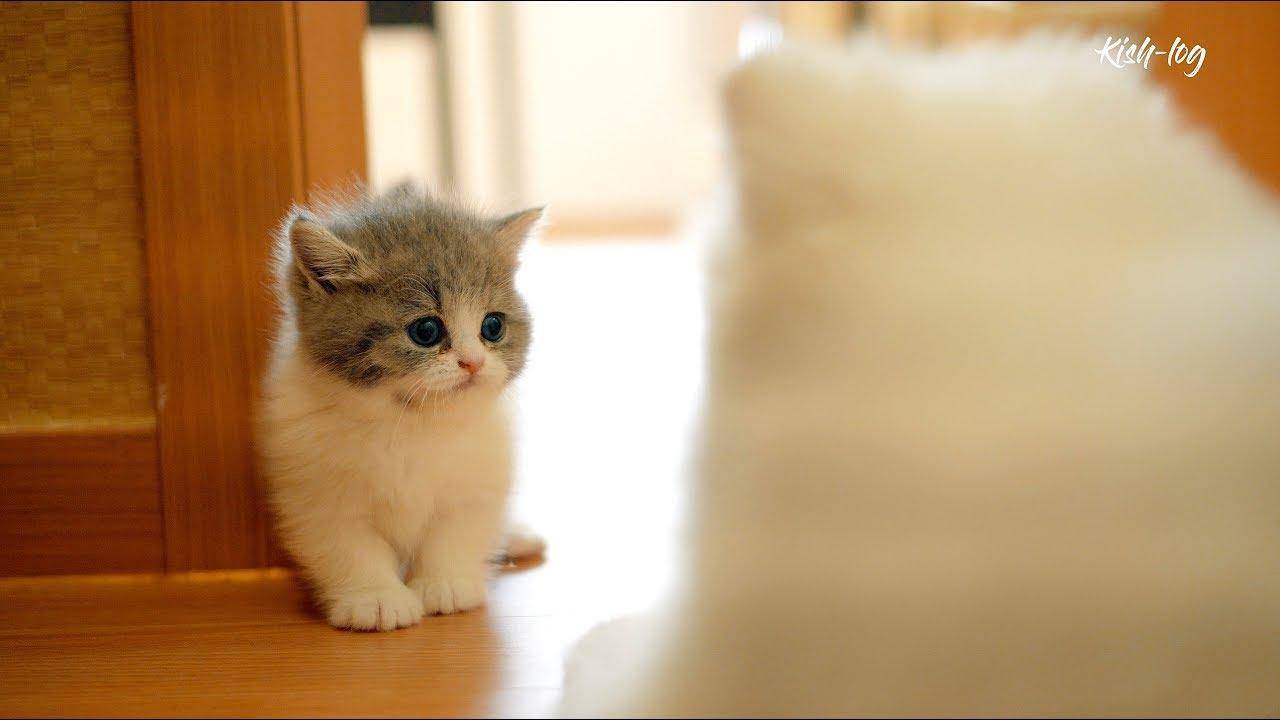 vlog dengan kitten