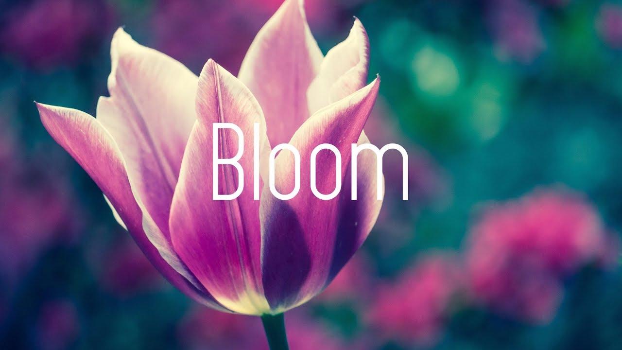 Dabin - Bloom (Lyrics) ft. Dia Frampton Image'