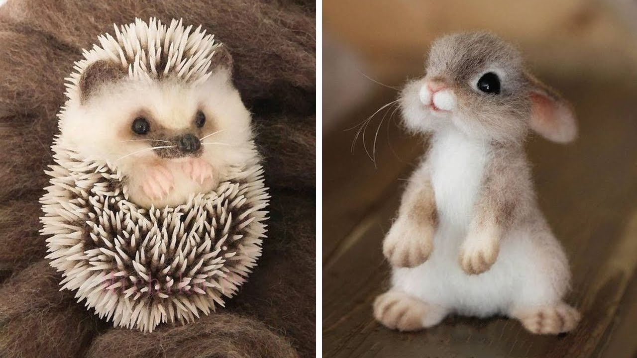 Cute baby animals Videos Compilation cute moment of the animals - Cutest Animals #4 Image'